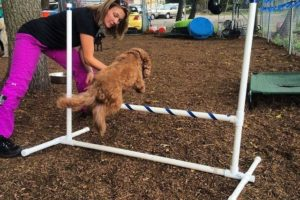 Perfect Paws | Dog Training & Doggie Daycare | Newton, MA | (508) 353-9266