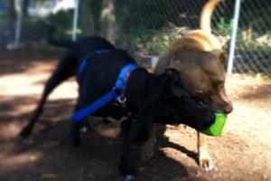 Perfect Paws   Dog Training & Doggie Daycare   Newton, MA   (508) 353-9266