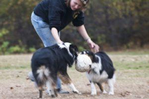 Perfect Paws | Dog Training & Doggie Daycare | Newton, MA | (508) 353-9266